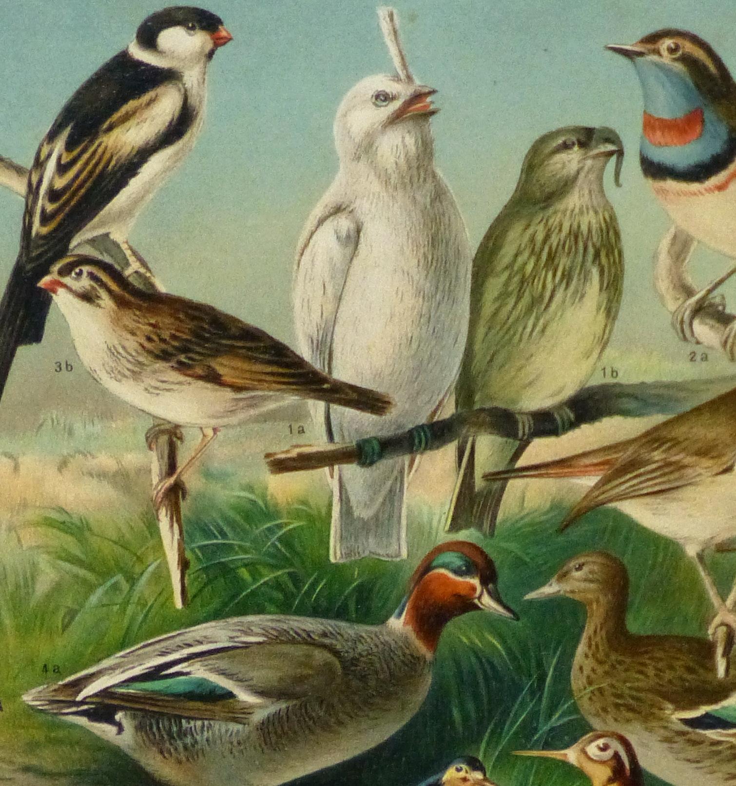 Bird Print, 1885-detail 2-9064K