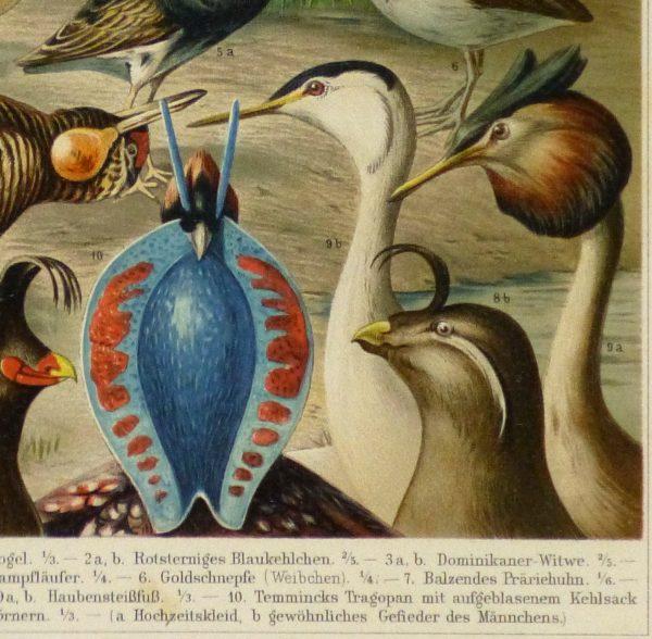 Bird Print, 1885-detail-9064K