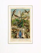 Bird Print, 1885-matted-9064K