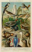 Bird Print, 1885-main-9064K