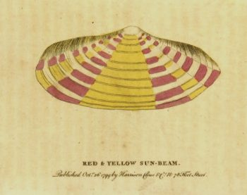 Sun Beam Shell Print, 1799-main-K4302