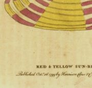 Sun Beam Shell Print, 1799-detail-K4302