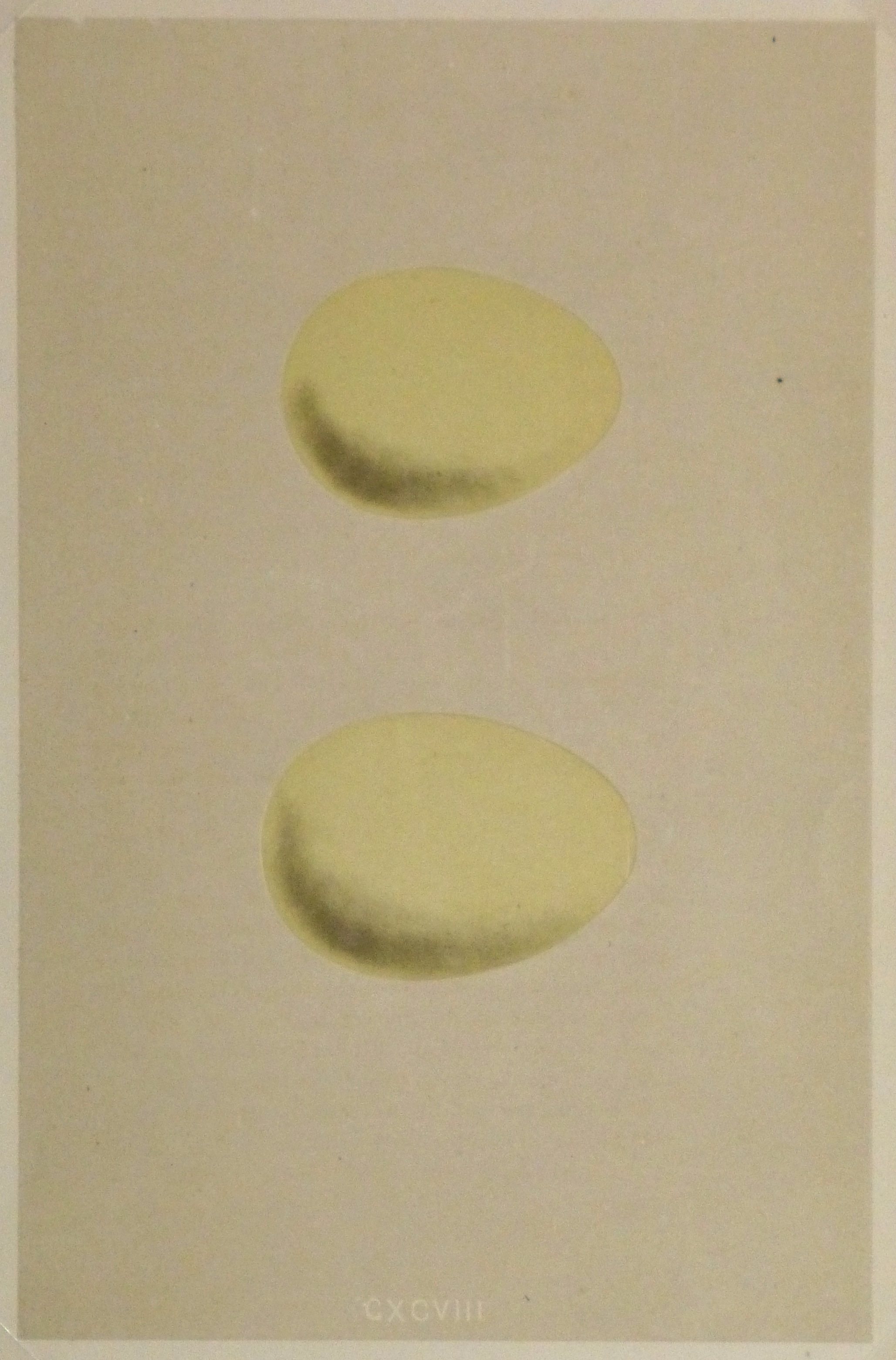 Egg Print, 1863-main-kb1049