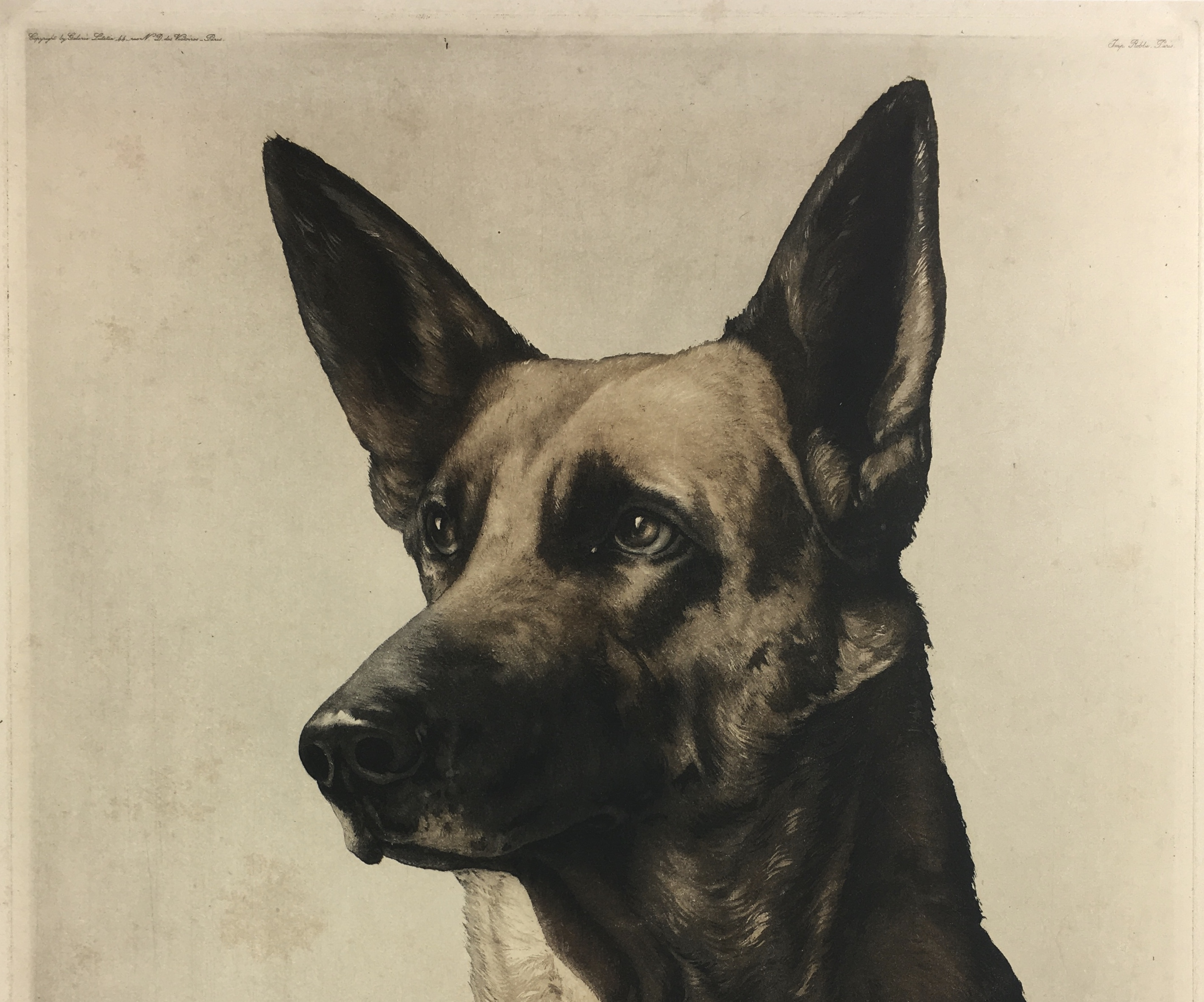 Animals Original Art - German Shepherd , Ch. Marciel, c.1920
