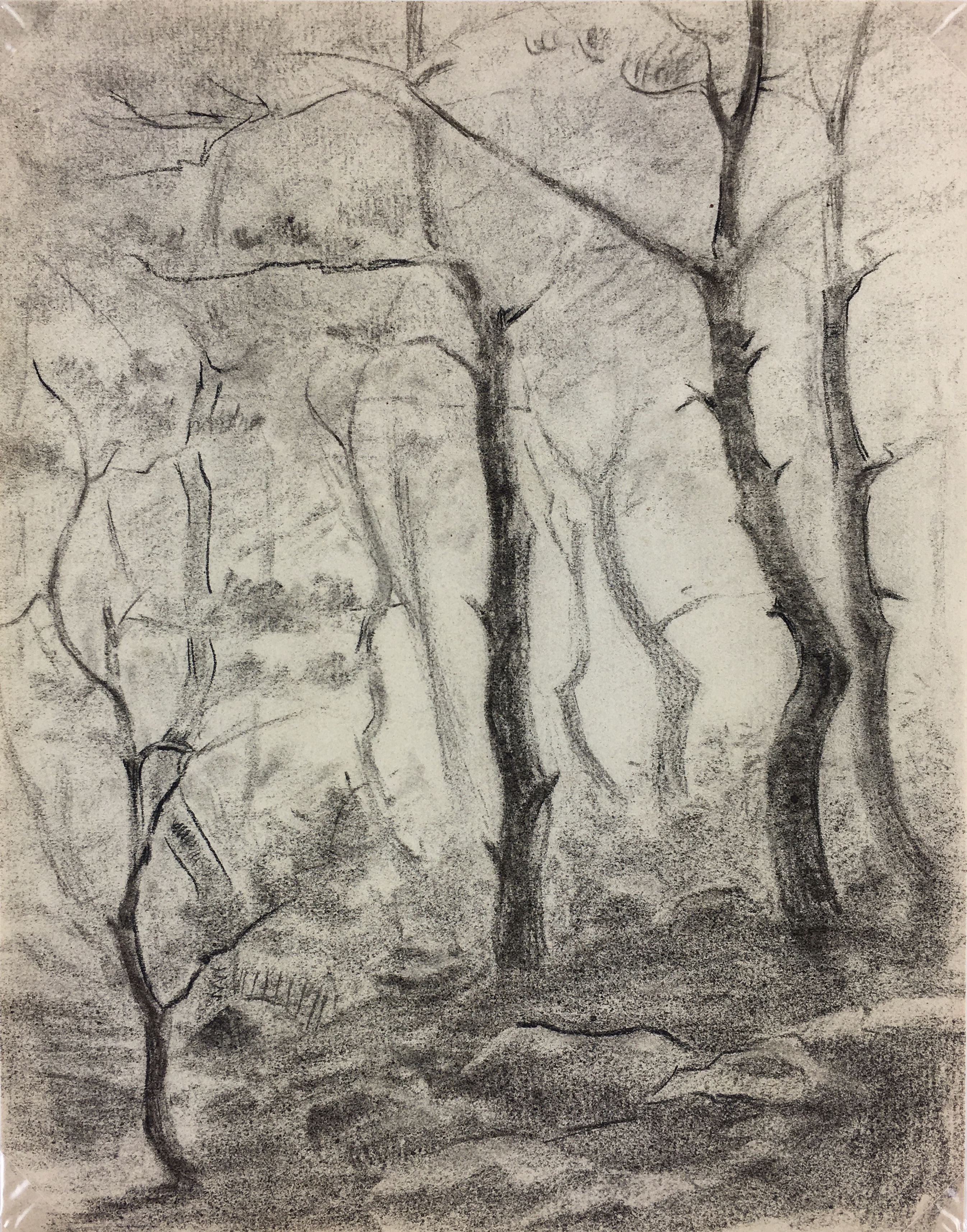 Nature Drawings Original Art - Drawing - Forest, c.1930