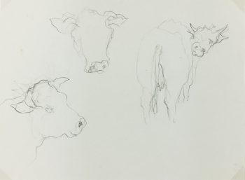 Animals Cattle Original Art - Cow , C.1950