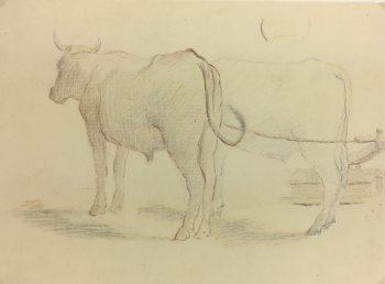 Animals Cattle Original Art - Cattle, Giselle Halff, 1959