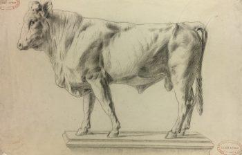 Animals Cattle Original Art - Bull Sketch, Robert Folappe, 1988