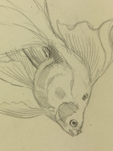 Animals Fish & Fishing Original Art - Fish Drawing, Marcel Bourgeois, 1946