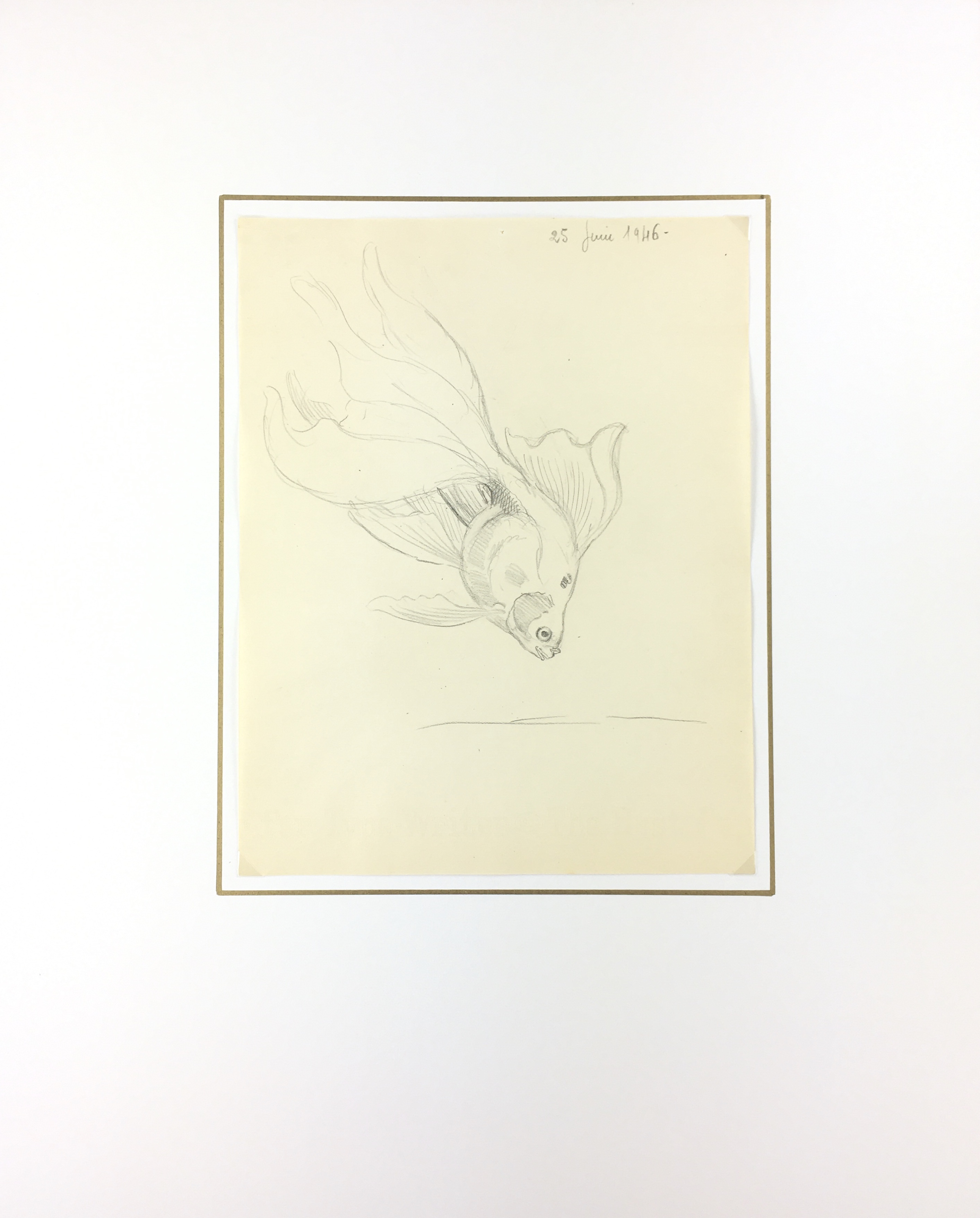 Animals Fish & Fishing Original Art - Fish Drawing, Marcel Bourgeois, 1946