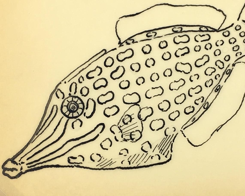 Animals Fish & Fishing Original Art - Longnose Filefish, Marcel Bourgeois, c.1960